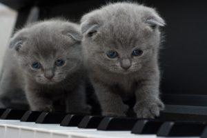 formation-au-piano-pour-tous